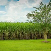 This Is Why the Guyanese Agriculture Sector Is Poised for Growth